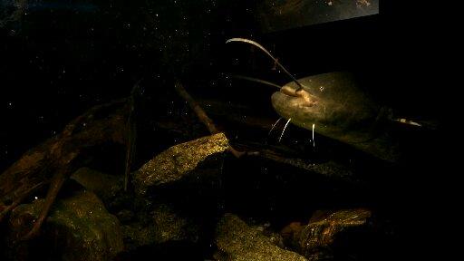 Akvarium Orlík